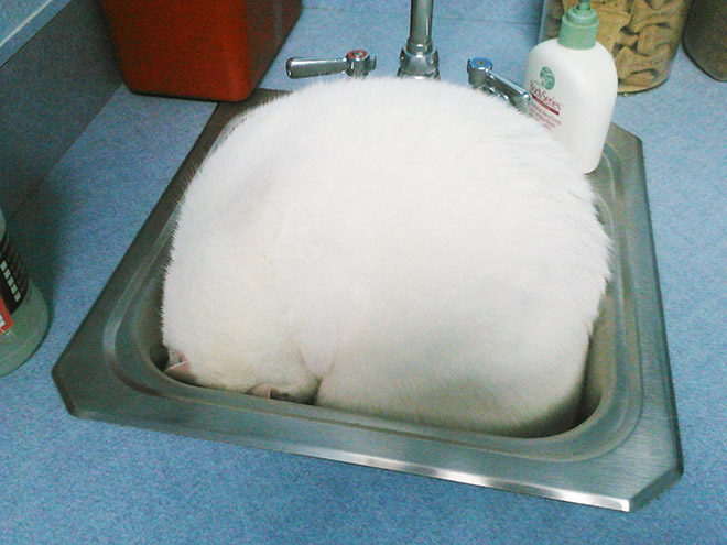 Poor scared cat hiding from the vet.