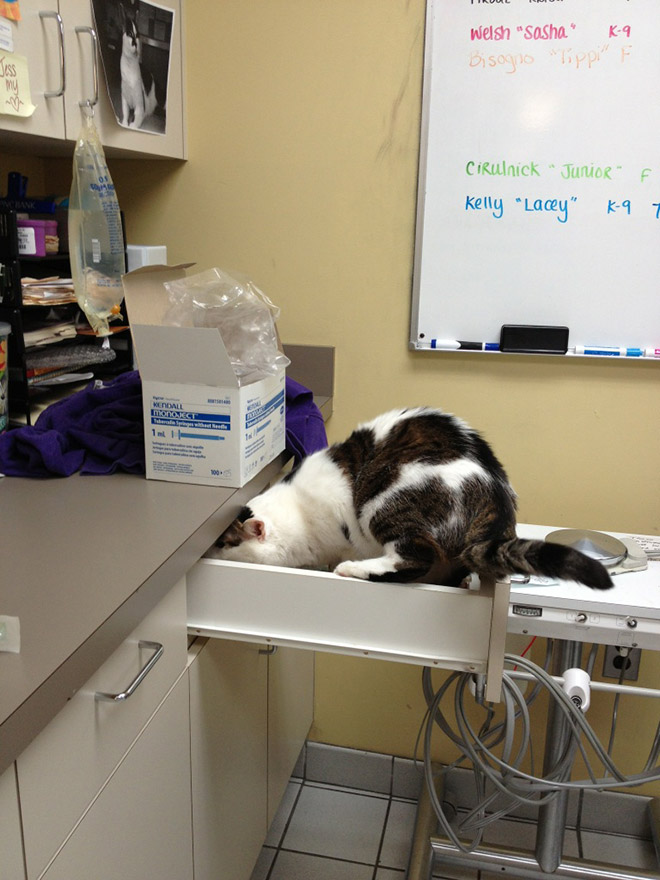 Drama queen cat hiding from the vet.