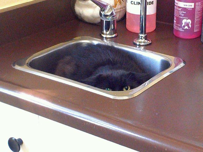 Drama queen cat hiding from the vet.
