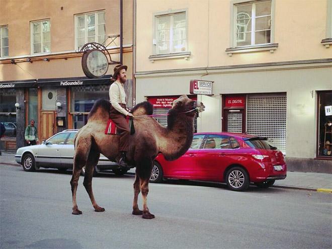 Crazy hipster riding a camel.