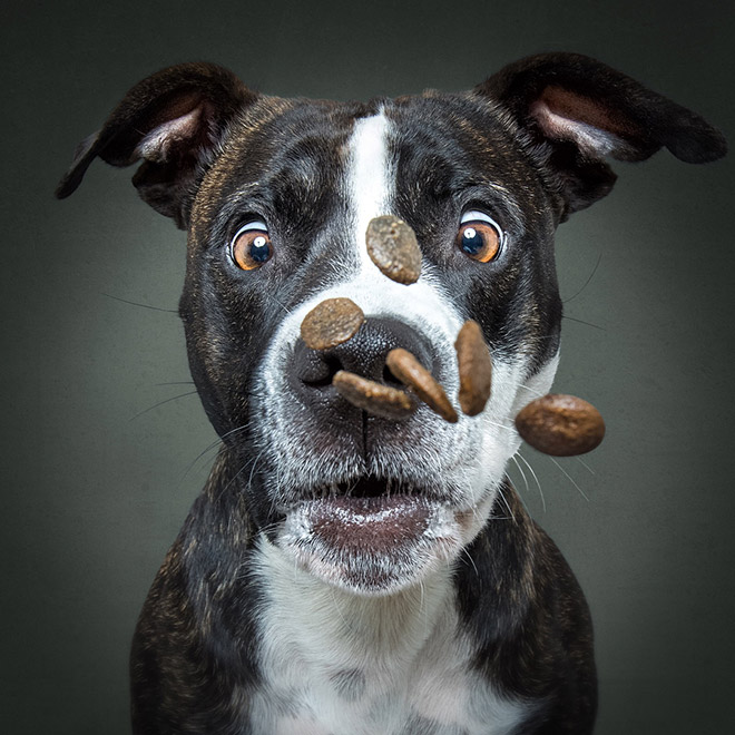 Funny expression of a dog trying to catch a treat.