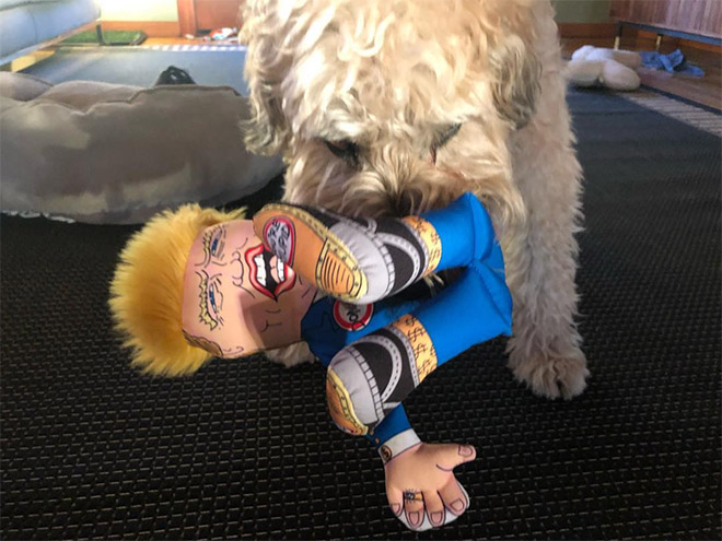 Dog attacking Donald Trump.