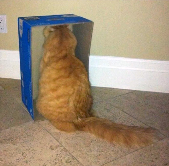 Some cats just can't figure out walls.