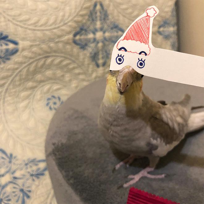 Birds are so much funnier with cartoon eyes.