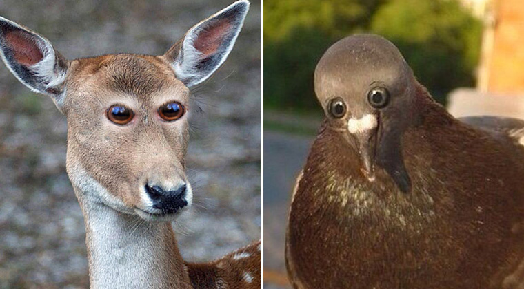 If Animals Had Eyes At The Front (Just Like Humans)