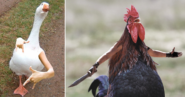 Gallery of Birds With Human Arms