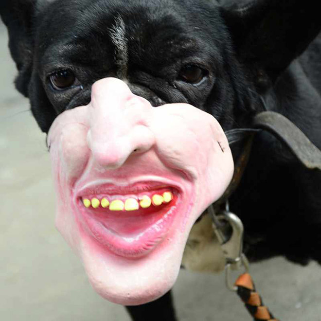 Creepy dog mask.