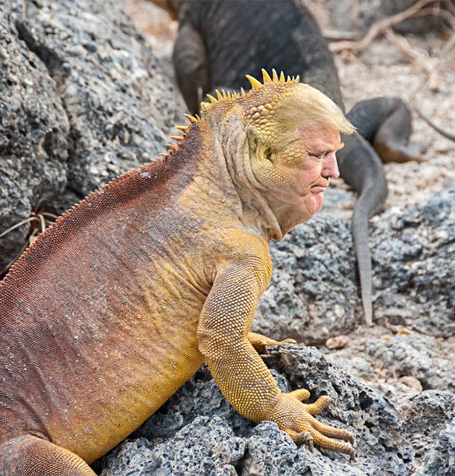 Trump's chin meets Photoshop.