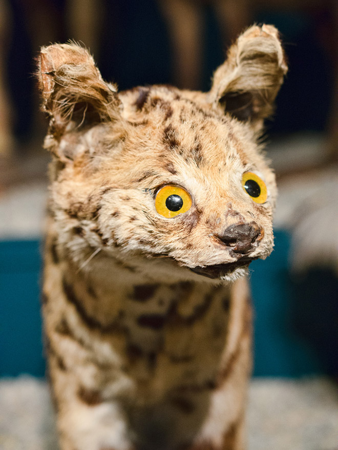 Derpy taxidermy fail.
