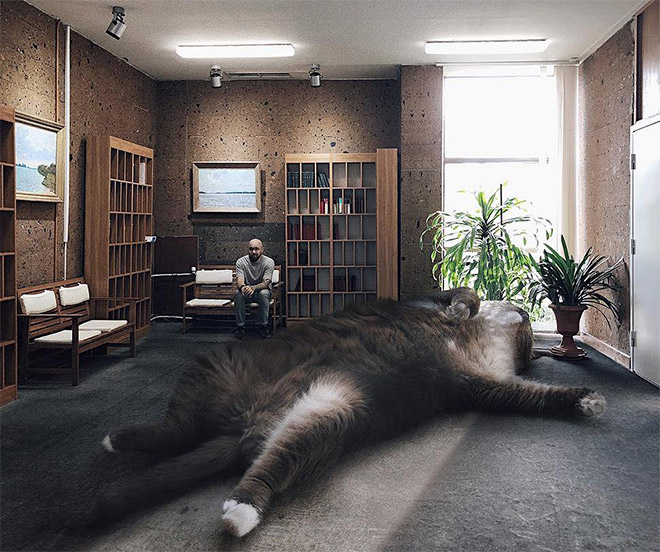 What if cats were huge?