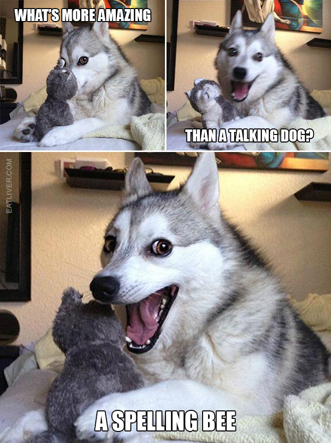 Bad puns dog meme.