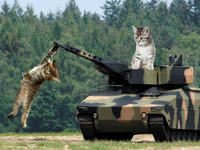Huge cats photoshopped with military hardware for no reason at all.