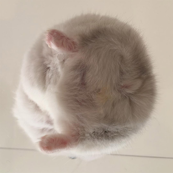 Take a look at this beautiful hamster butt!