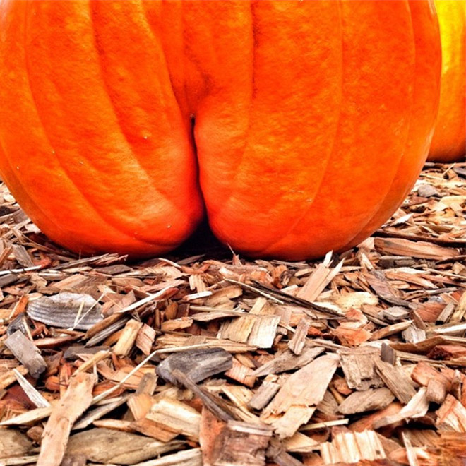 Hilarious butt-shaped Halloween pumpkin.