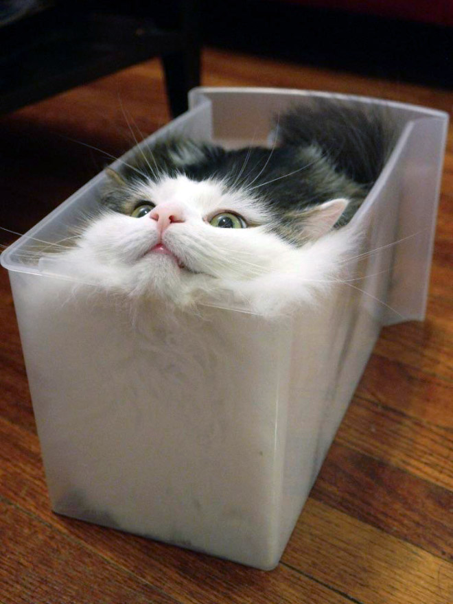 Proof that all cats are actually liquid.