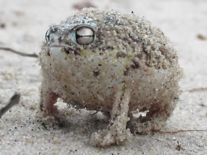 The world's grumpiest frog.
