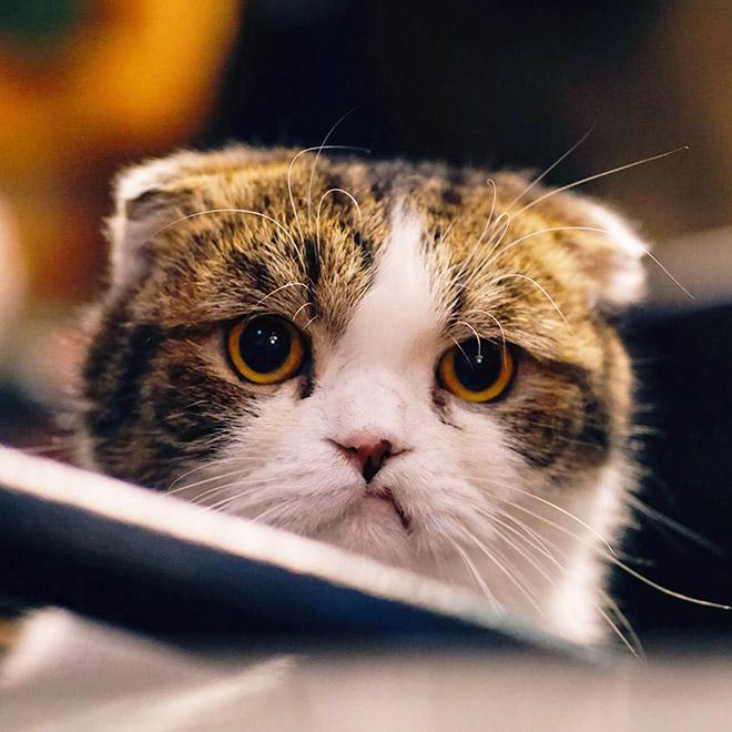 Cat judging your poor life decisions.