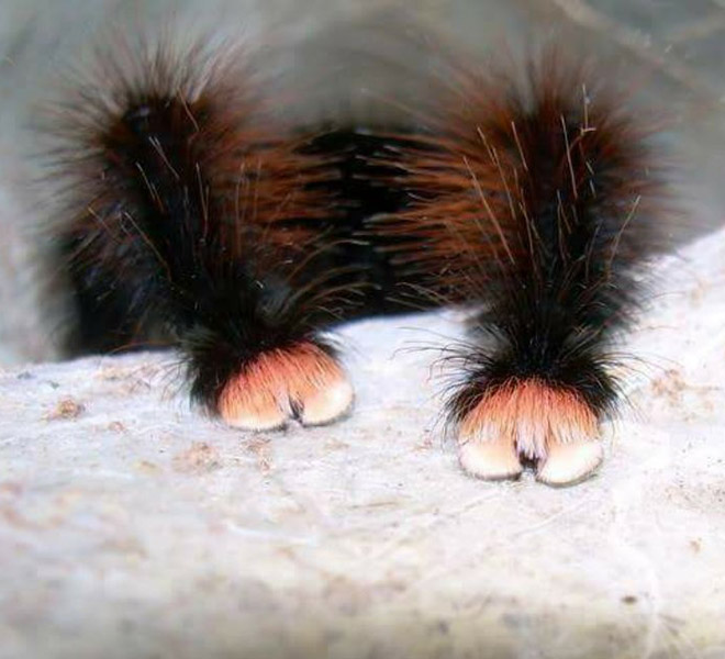 Really cute little spider paws.