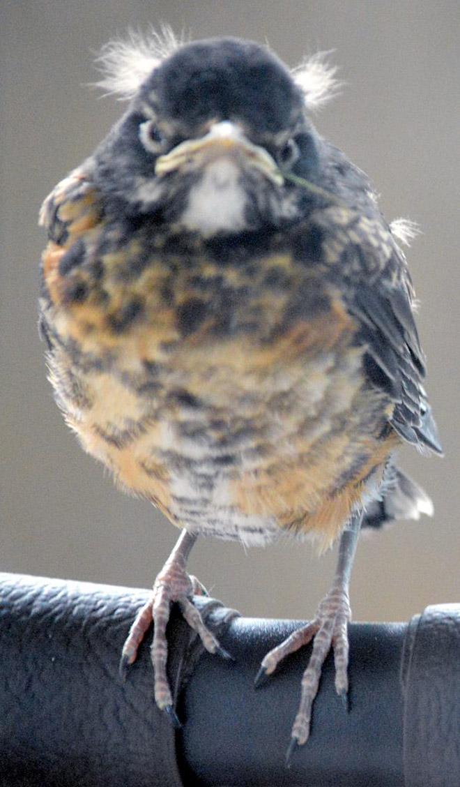 This bird looks like Bernie Sanders.