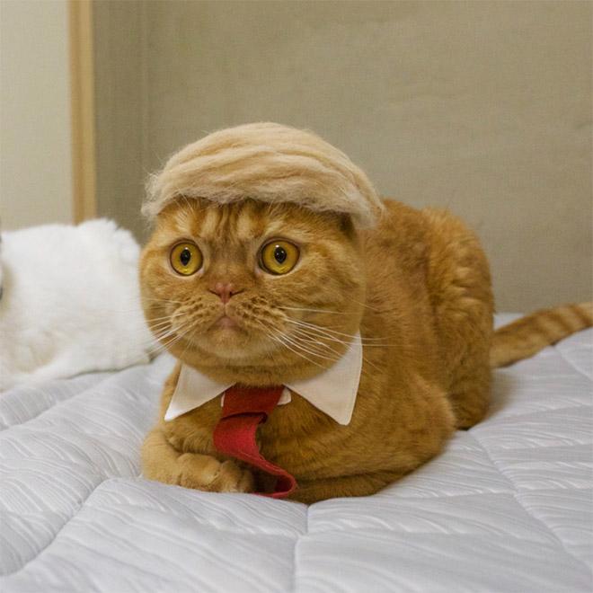 Donald Trump cat double.