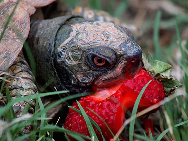 Animals eating berries look truly scary.