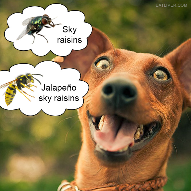 Nature's snacks: sky raisins and jalapeño sky raisins.