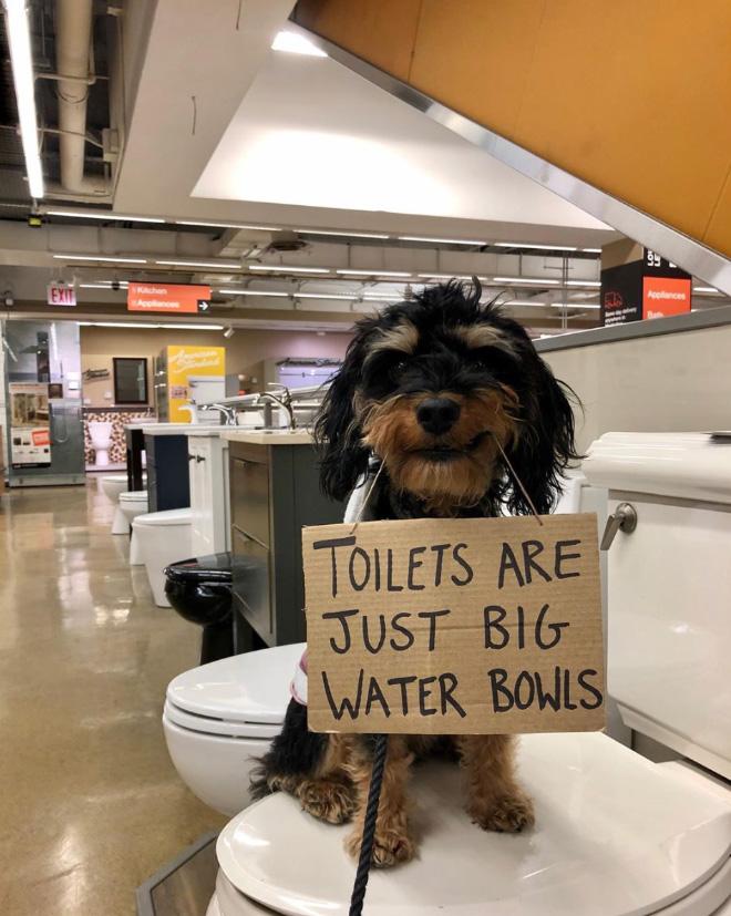 Brave protesting dog.