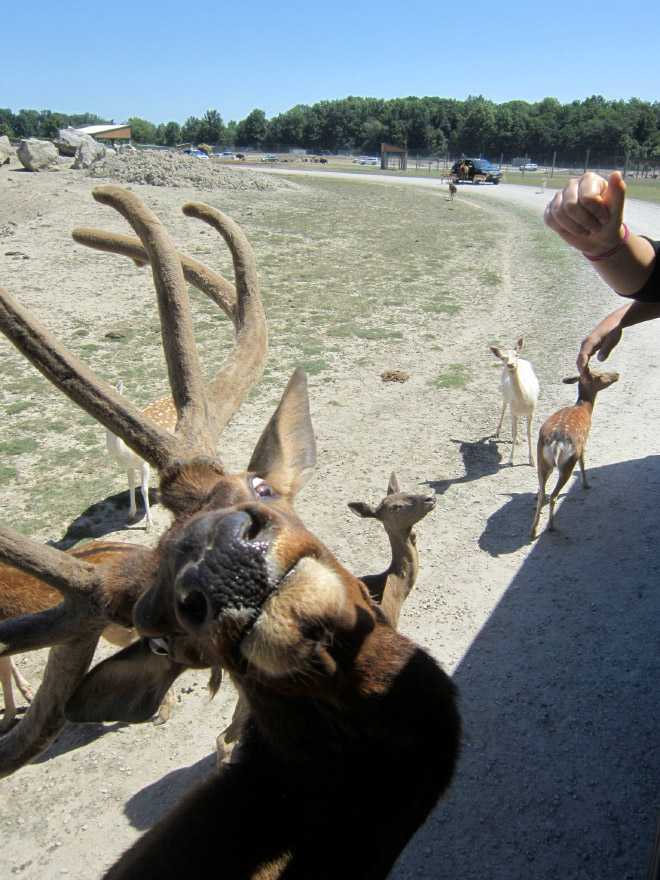 Funny wildlife photo fail.