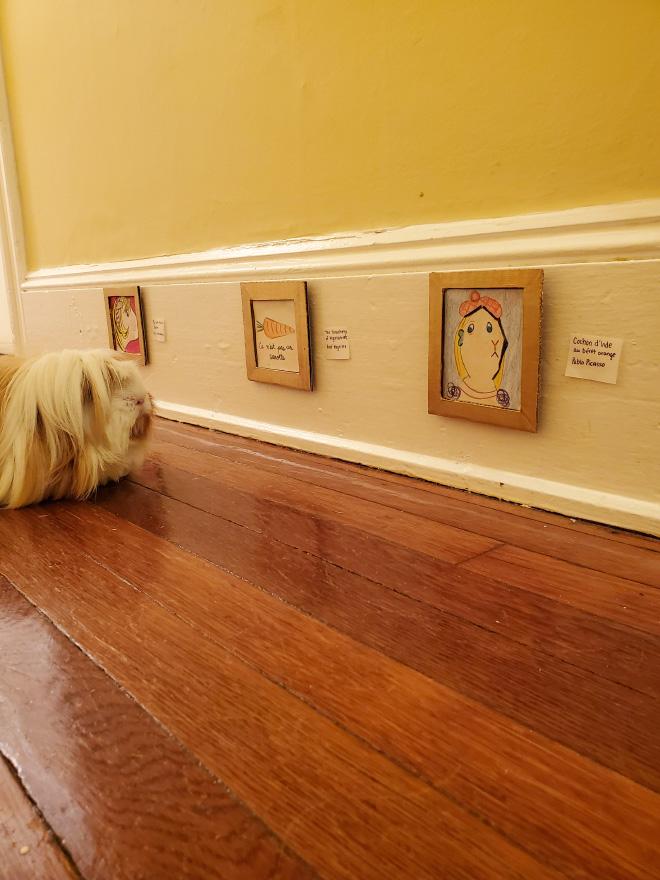 Guinea pig enjoying paintings.
