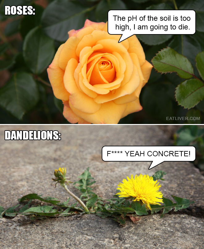 Not all flowers are the same. Some are way more badass than others.