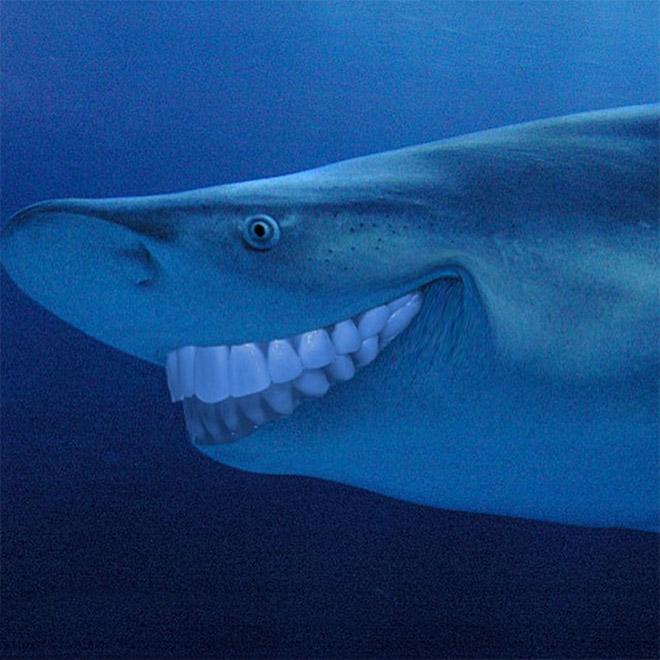 Sharks with human teeth look awesome!