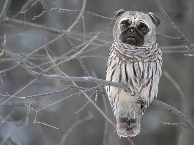 Owls + Dogs = Dowls.