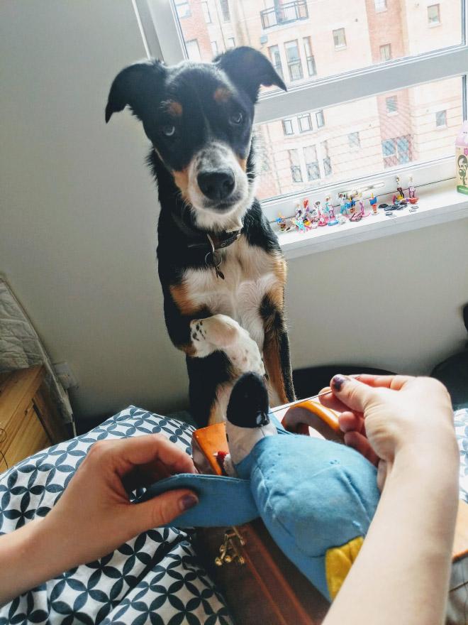 Pet toy surgery.