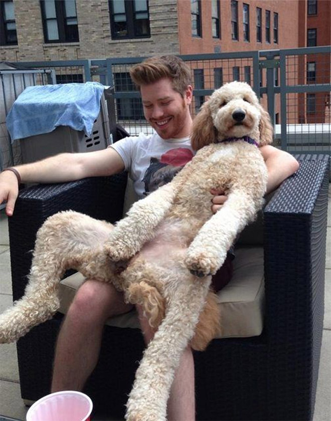 This dog forgot how to sit.