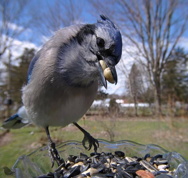 Hidden cam at the bird feeder. This is the result.