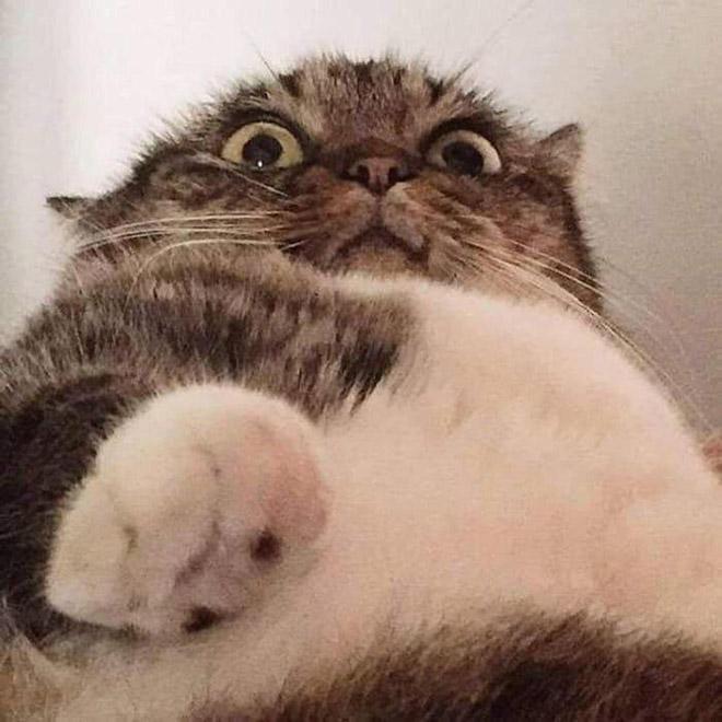 Laptop camera selfie.