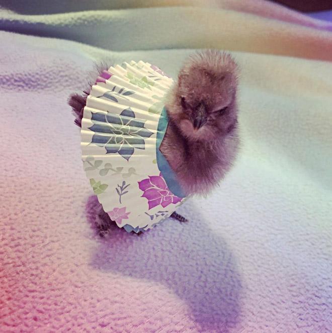 Chick tutus.