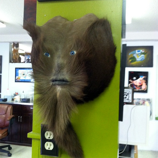 Deer butt taxidermy sasquatch.