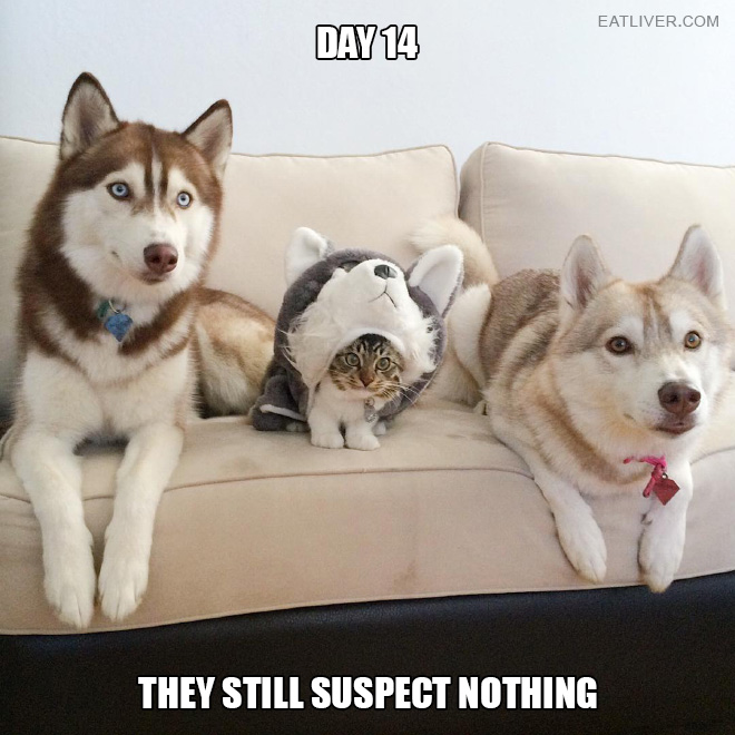Day 14. They still suspect nothing.
