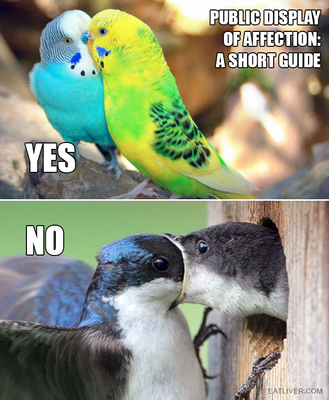 As demonstrated by birds.