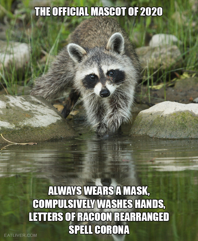 Always wears a mask, compulsively washes hands, letters of racoon rearranged spell corona.