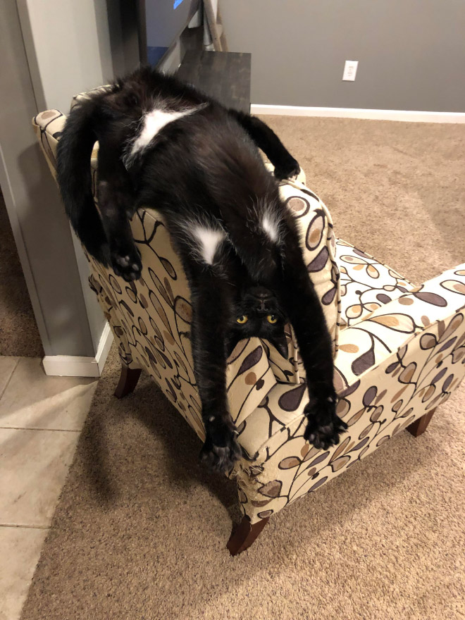 Some cats are weirder than others...