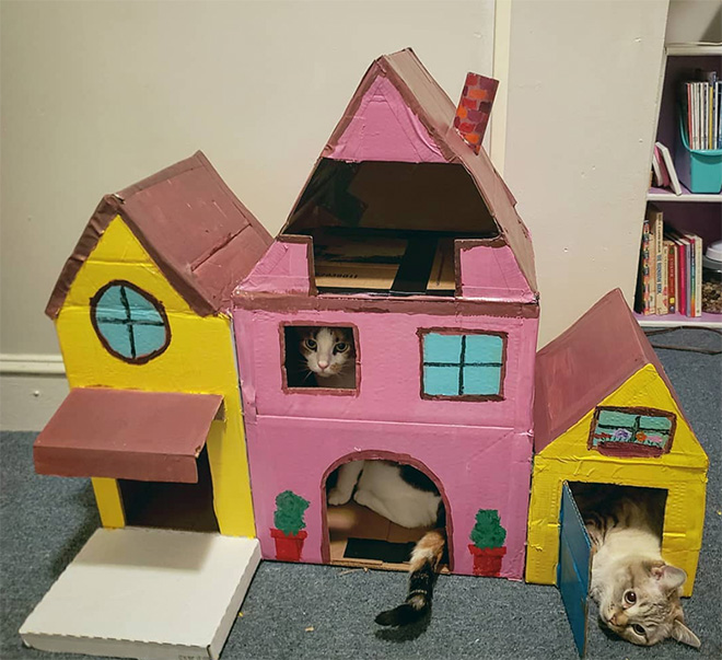 Awesome DIY cat fort.