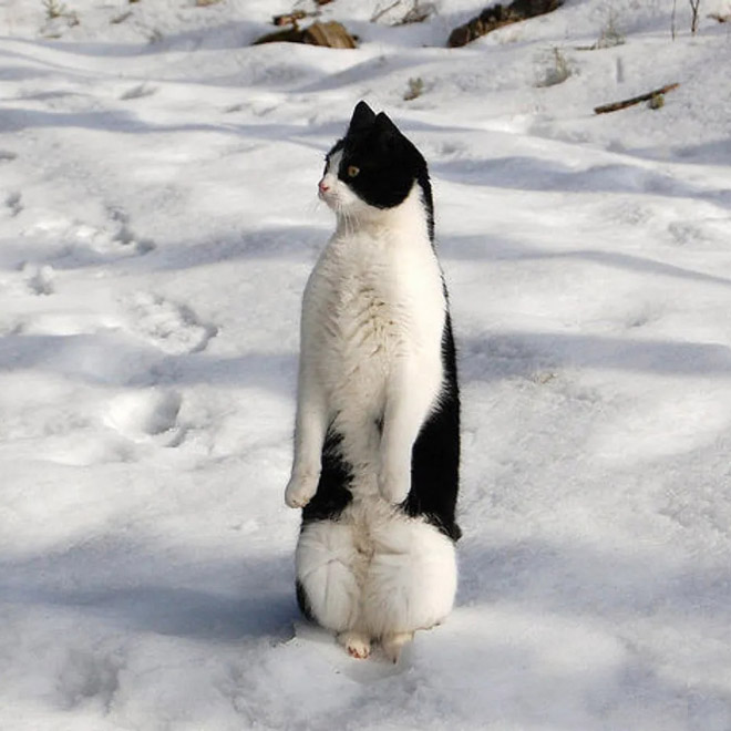 Penguin cat.