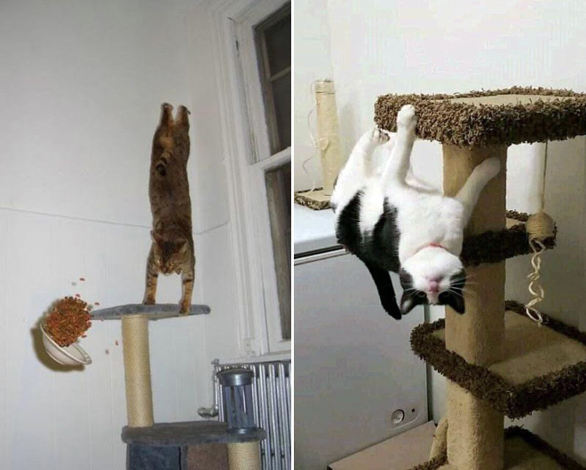 Some cats defy the laws of physics.