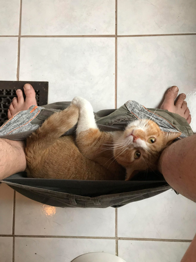 Cats don't give a crap about your privacy.