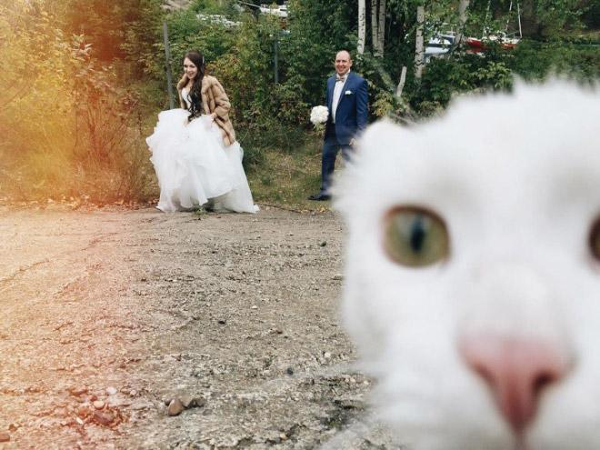 Funny photobombing cat.