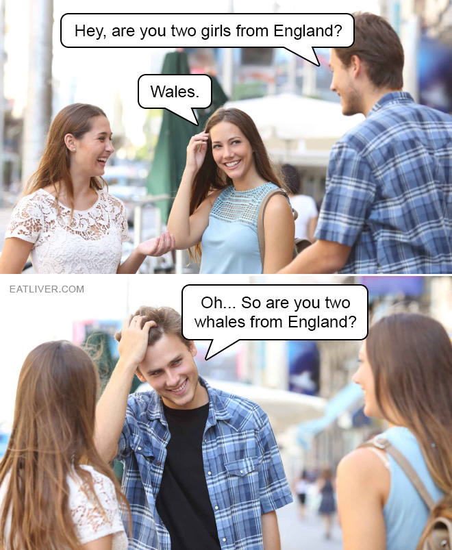 Oh... Sorry... So are you two whales from England?