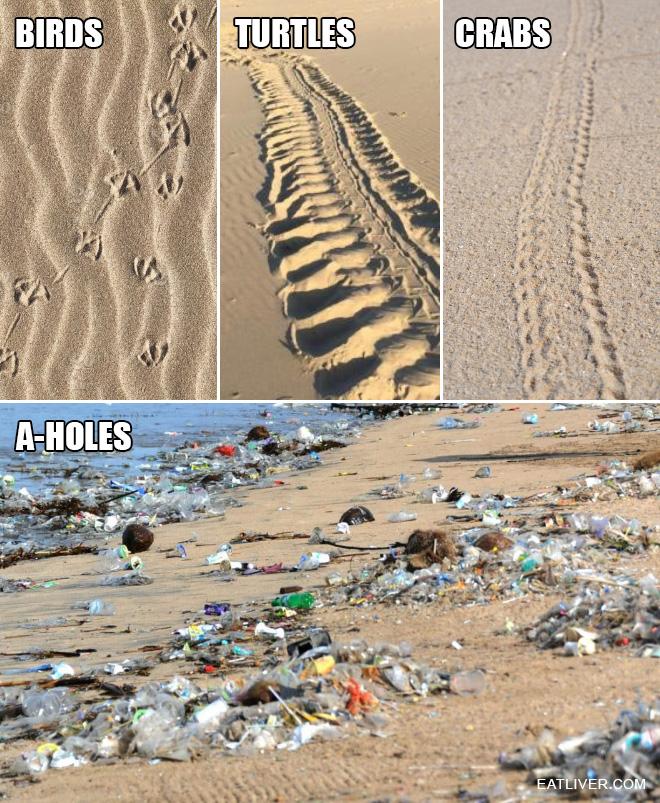 Let's learn animal footprints!