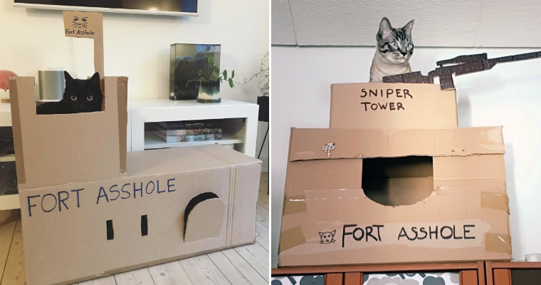 Bored Quarantined People Have Started Building A-hole Forts For Their Cats